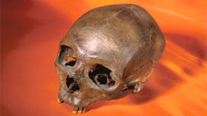fossil_skull
